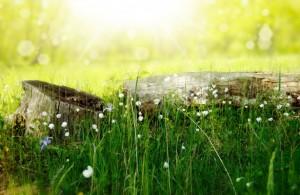 flower-meadow-1371791252soE