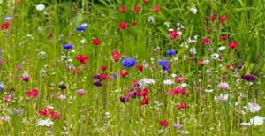 wild-flowers-1363733002BId